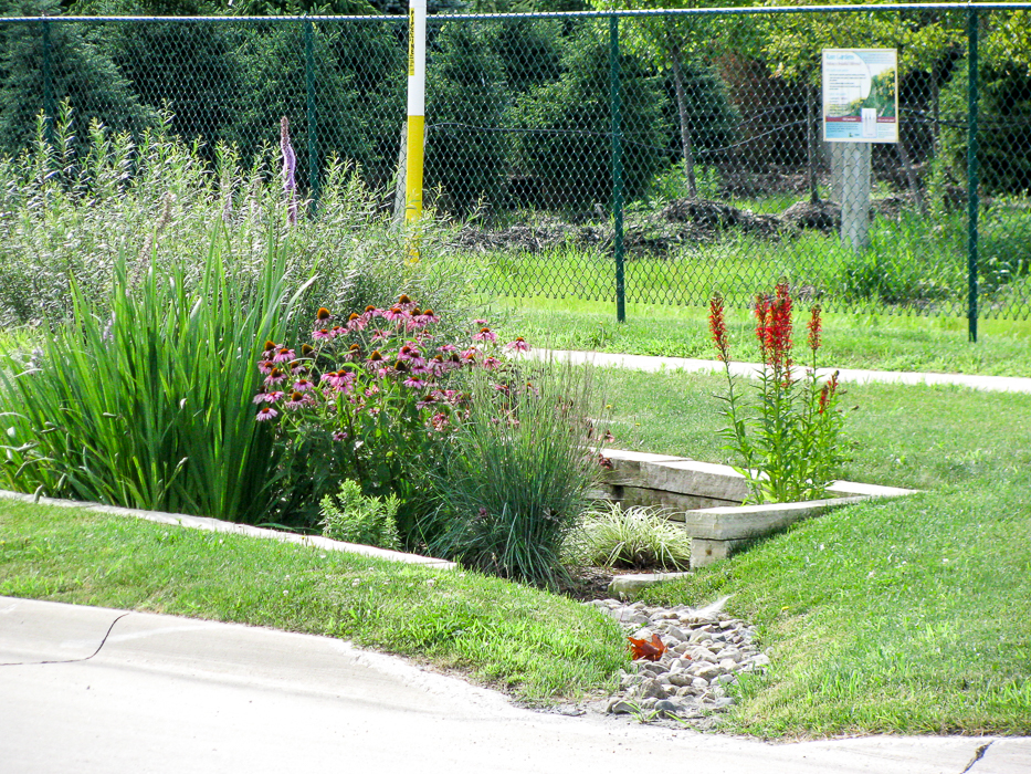 Forever Green Coralville Iowa Landscaping rain garden