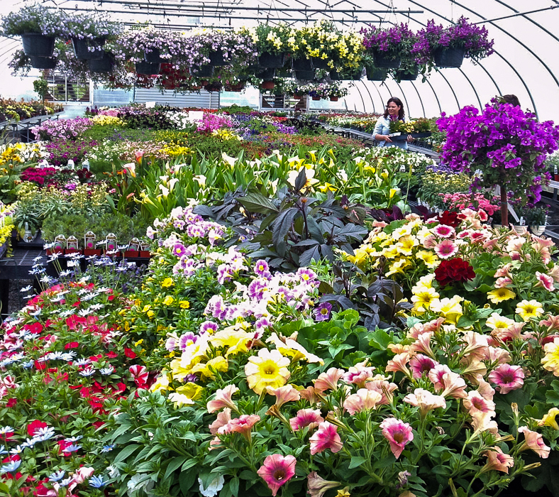 Forever Green Grows Coralville Iowa Garden Center flowers greenhouse