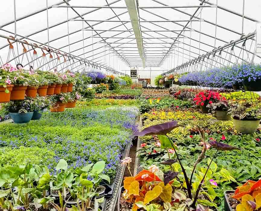 Forever Green Grows Coralville Iowa Garden Center flowers plants greenhouse