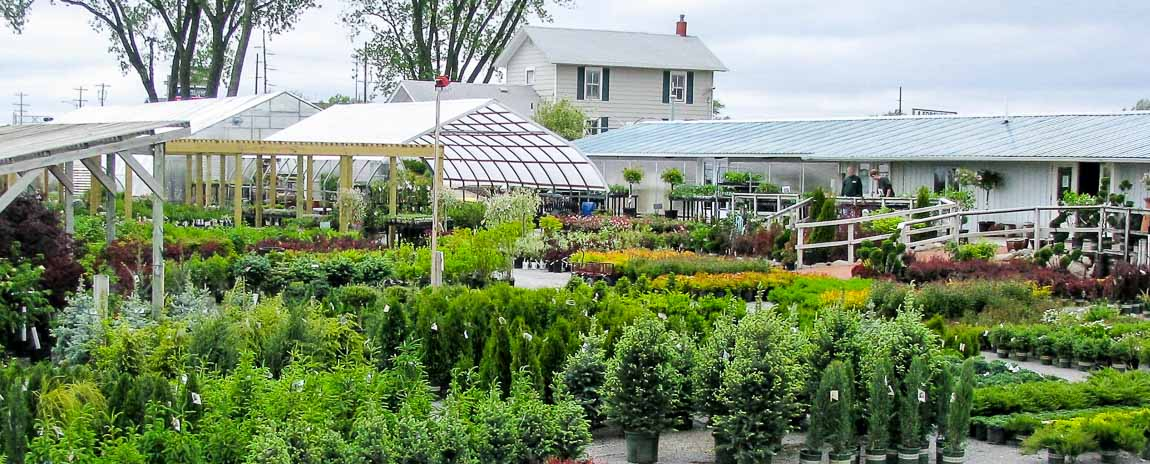 Forever Green Grows Coralville Iowa Garden Center outside