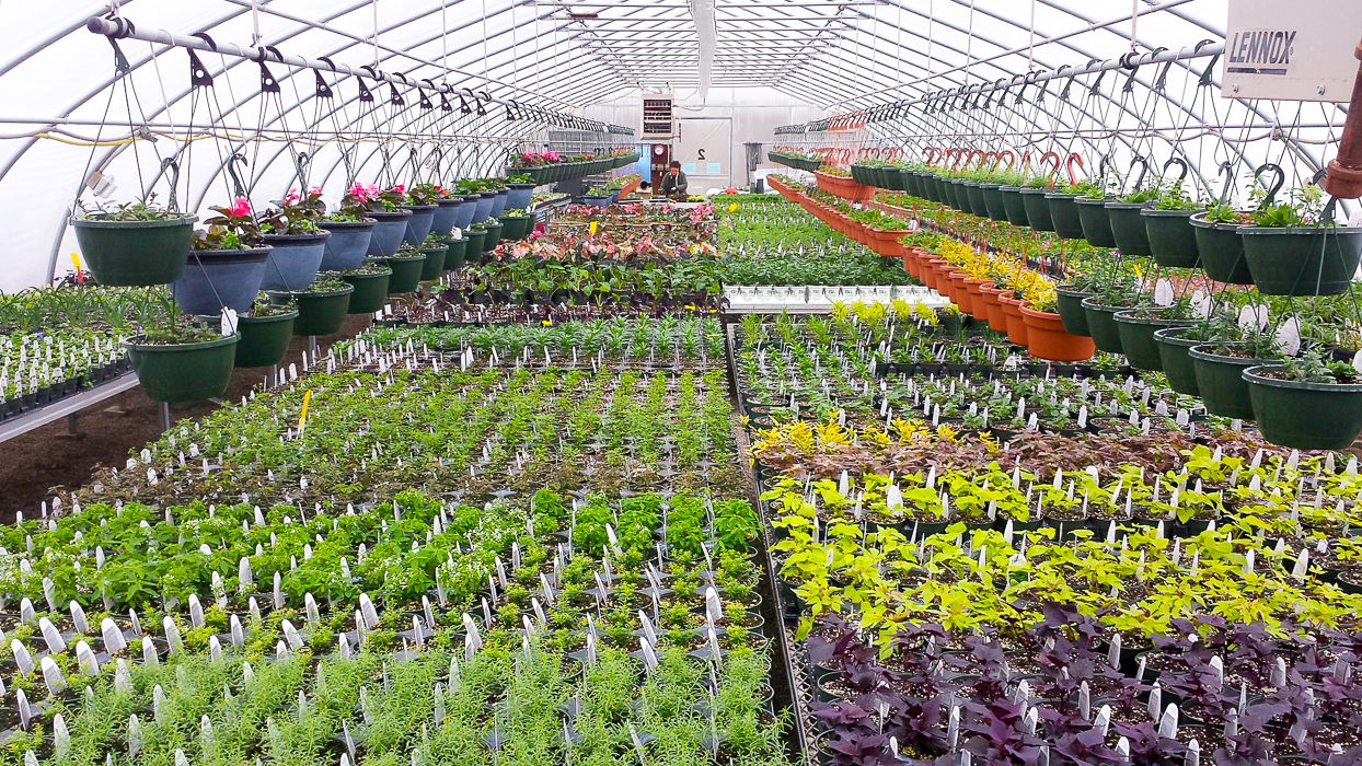 Forever Green Grows Coralville Iowa Garden Center plants greenhouse
