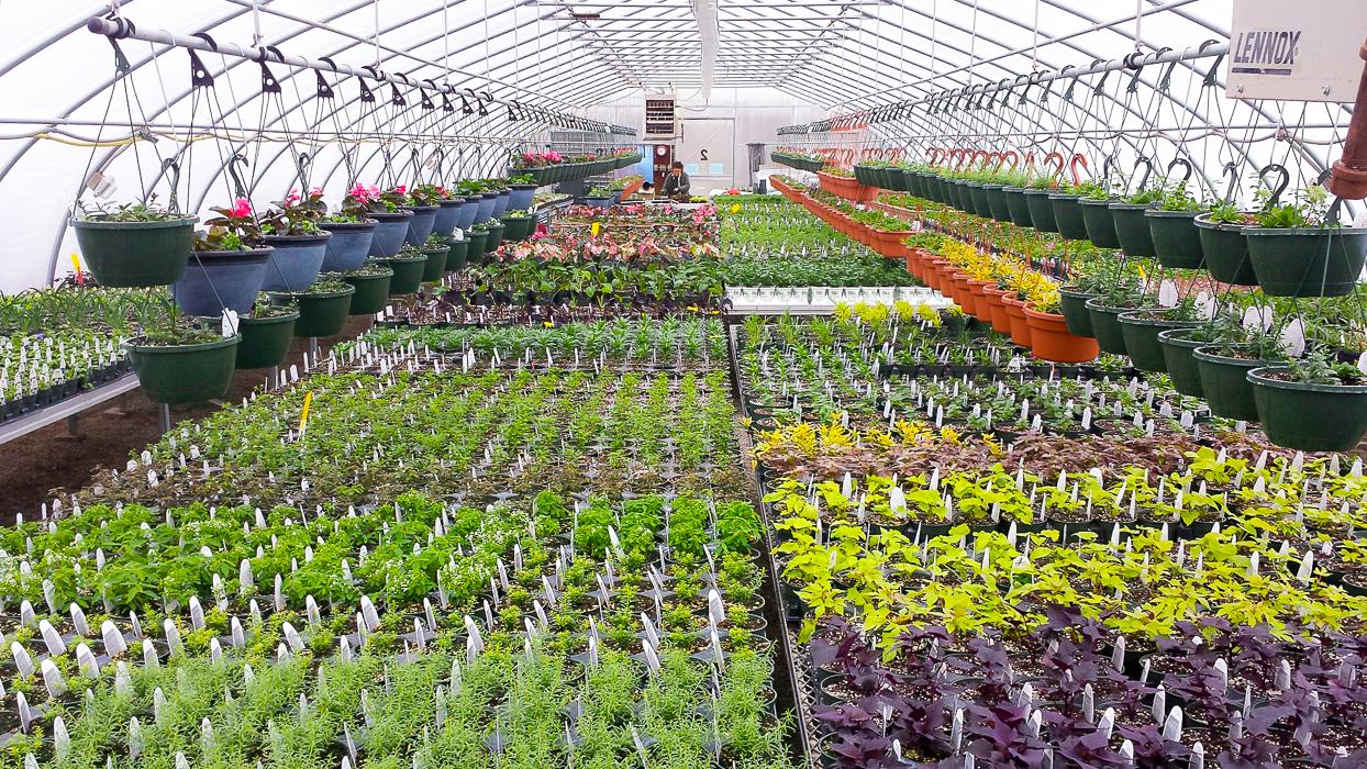 Forever Green Grows Coralville Iowa Garden Center plants greenhouse