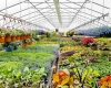 Forever Green Grows Coralville Iowa Garden Center flowers plants greenhouse