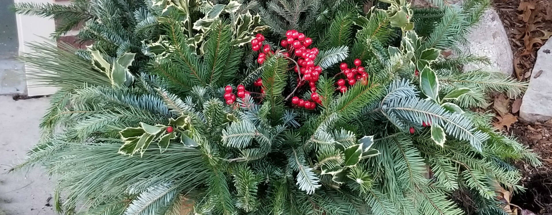Forever Green Coralville Iowa Garden Center Christmas tree header image